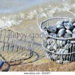 Clam bucket and rake