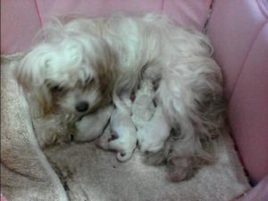 Sissy and her Puppies